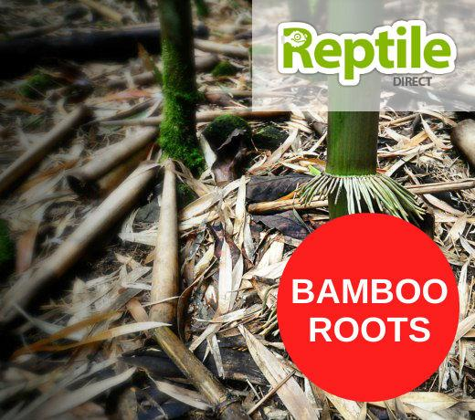 Bamboo Roots